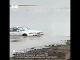На Петропавловском озере рыбаки выудили «японку»