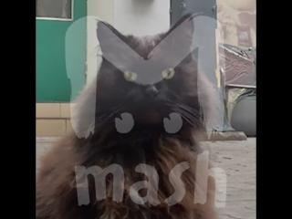 В Булгаковском доме похитили кота Бегемота