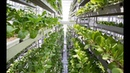 Sky Urban Vertical Farming System (WORK)