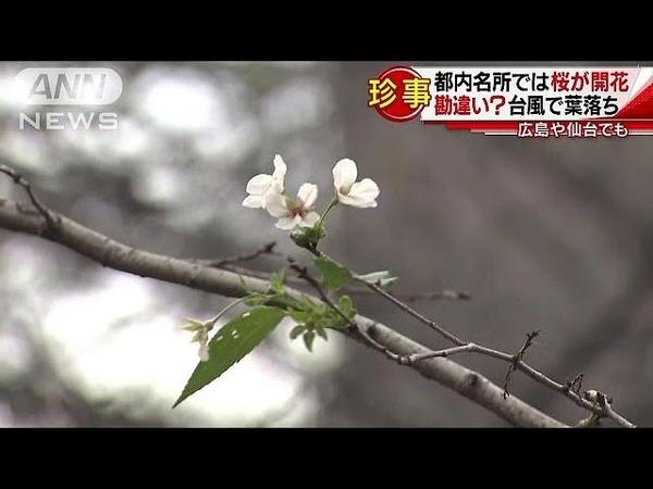 北海道でうっすら雪化粧・・・都内名所では桜が開花(18/10/17)