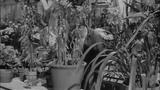 Дни вина и роз - Days of Wine and Roses (1024x576p)(Джек Леммон, Ли Ремик)(Оскар-1963)1962, США, мелодрама, драма, DVDRip-AVC MVO (2.39Gb)(Фильм ...