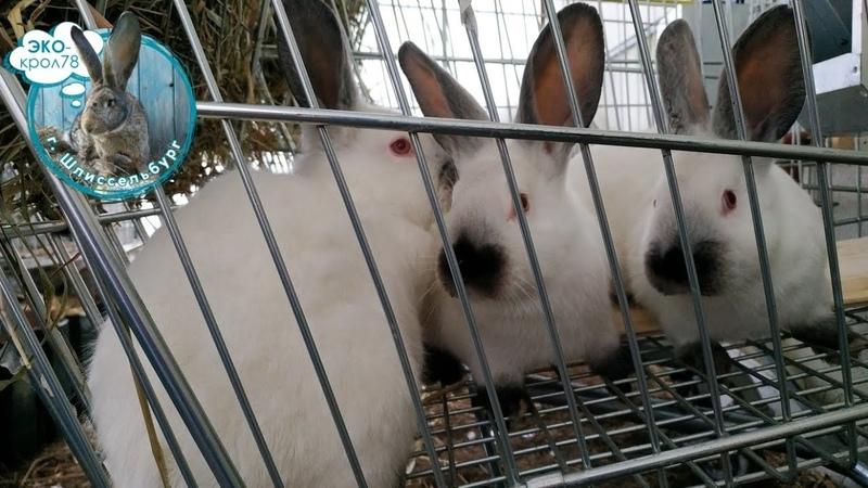 Клетки для отсадки кроликов Что делать если не хватает клеток
