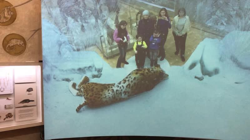 Ледниковый период Саблезубый тигр