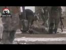 Позиционные будни в Сирии