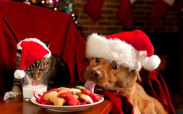 Новый год - Новый год на носу, а у нас ни ёлки, ни оливье,- сказала собака. - Ёлка и ниебёт, поддакнула кошка. Смотрю на них - натуральные засранцы. В переносном, конечно, смысле. С гигиеной у