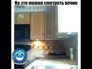 video.prikol___BhiNHwAHlnL___.mp4