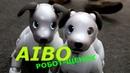 Айбо / Aibo / робот / щенок / милая собачка / sony / интересная игрушка