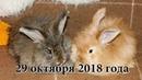 Приучение крольчат породы немецкая ангора к жизни в квартире. Фильм 1
