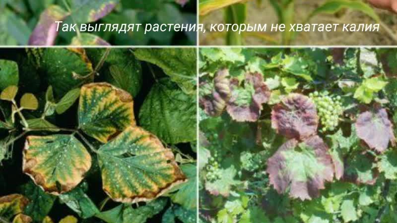 Минеральные удобрения. Томск