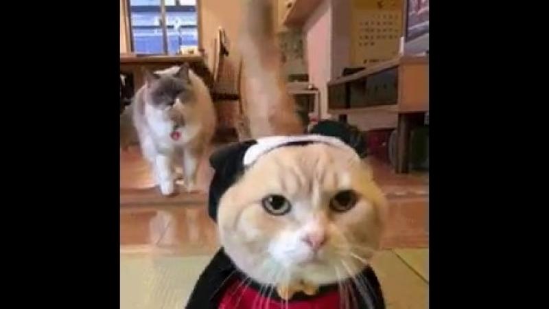 Кот = Микки Маус)