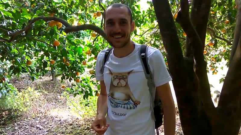 Сыроедческий тур по Турции. Самый живой отзыв участников об апельсинах!