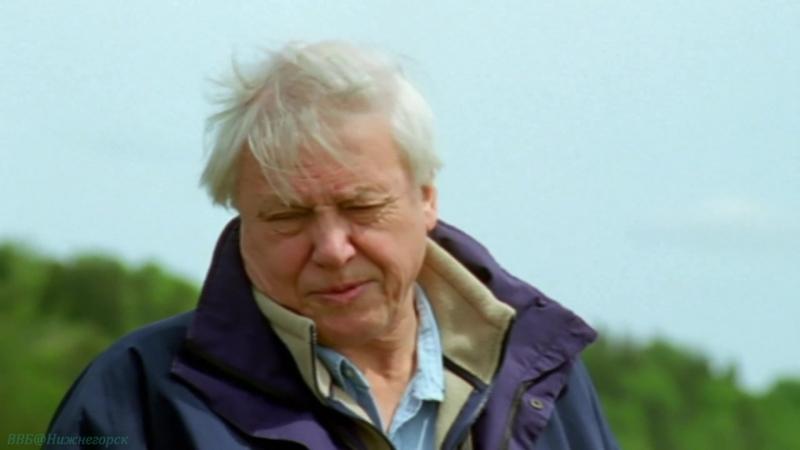 BBC «Жизнь млекопитающих (06). Преимущества» (Познавательный, природа, 2002)