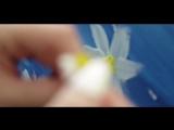 Лера Огонек - Ромашка (Премьера клипа!) 2018_1.mp4