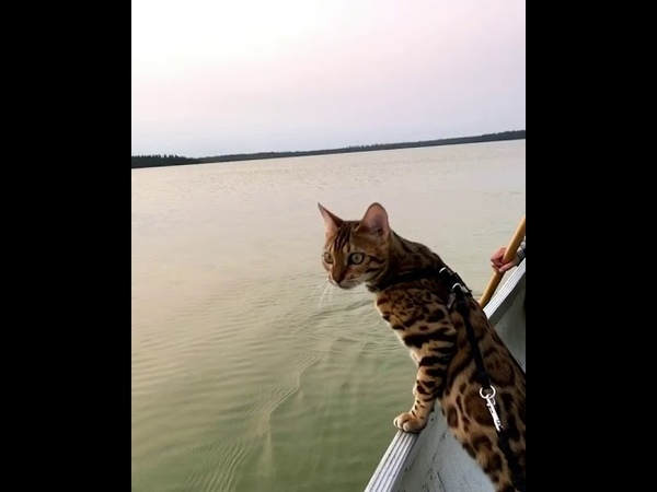 Cat Tries To Help Paddle Boat