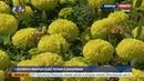1 сентября в Люберцах будет теплым и дождливым