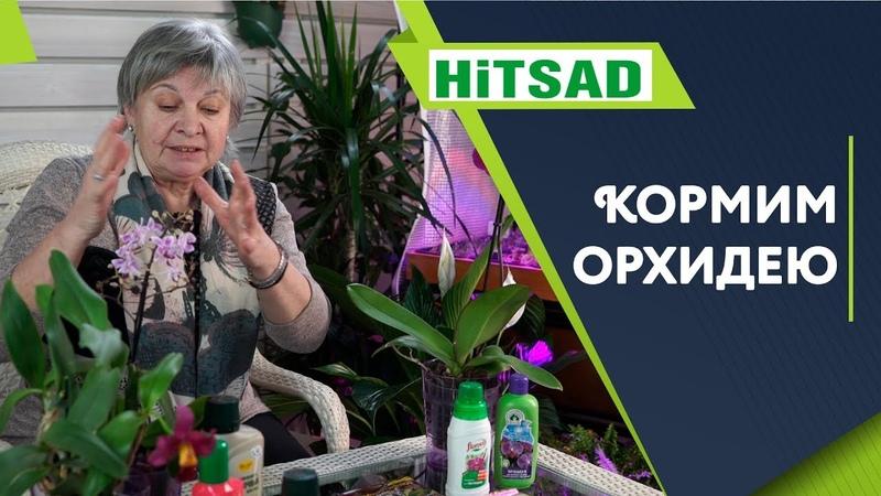 ПРАВИЛЬНАЯ Подкормка Орхидеи 🌺 Советы от Хитсад ТВ 🌺 Уход за Орхидеей