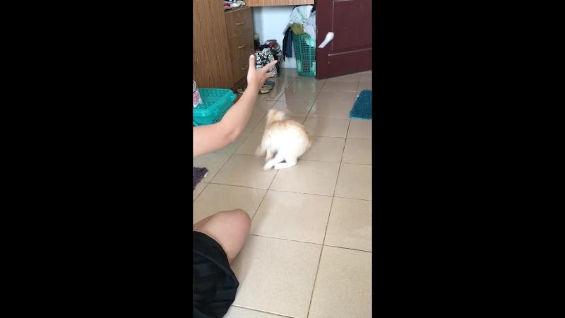 Кошка цэ собака