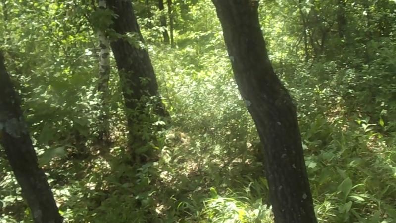 лес при входе на обочине