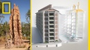 See How Termites Inspired a Building That Can Cool Itself National Geographic