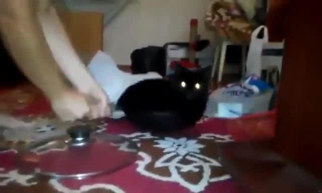 Unidentified Feline Object