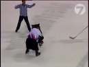 Живой мишка играет в хоккей=