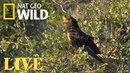 Safari Live - Day 157   Nat Geo Wild