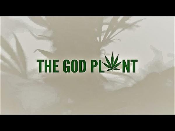 Божественное растение მოკლე ისტორია ღვთიური მცენარე (2018)