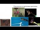 Основы биологии (12). Факторы эволюции. Систематика живых организмов. Возникновение жизни на Земле.