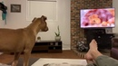 Pit bull puppy reaction to The Lion King