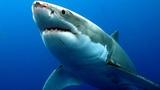 Когда акулы нападают 1 серия - Глубоководный террор