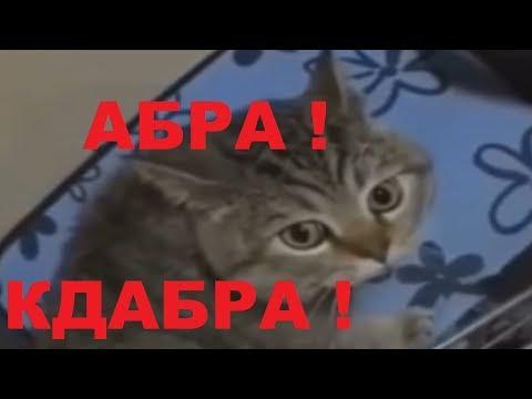 Кот ЧИТАЕТ ЗАКЛИНАНИЕ
