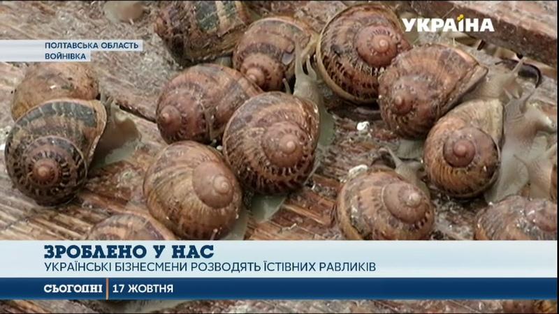 50 тонн равликів цього року відправить закордон найбільша в Україні ферма