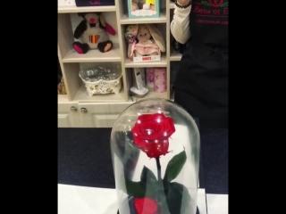 наши шикарные розы прайм в ханты- мансийске !