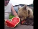 Все хотят отведать вкусного арбуза