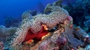 Anemonefish Nature's Aquarium DVD ~ ocean scenes relaxation music for your TV with clownfish