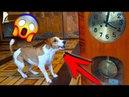 Джина Увидела ДУХОВ В ДОМЕ собака странно СЕБЯ ВЕДЕТ МИСТИКА Дом Призрак Elli Di Online