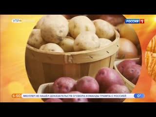 Оказывается, картошка помогает похудеть... но не вся