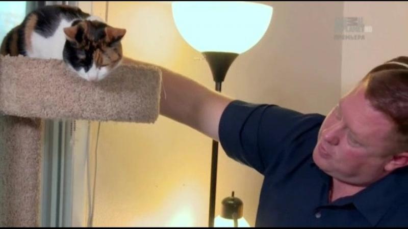 10 Адская кошка