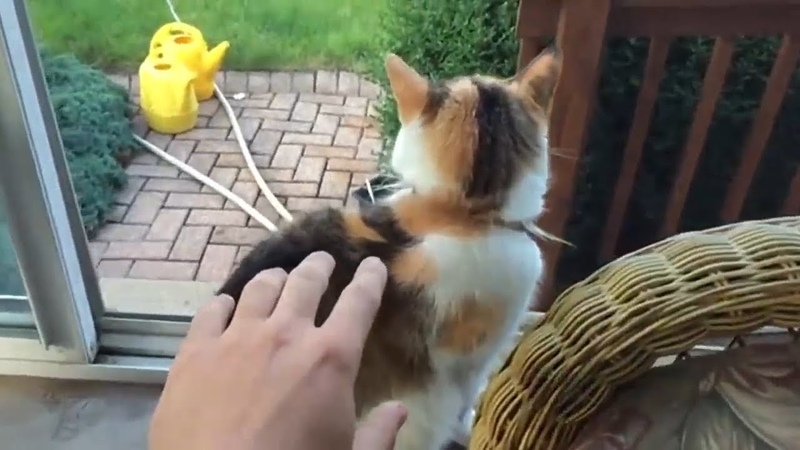 EPIC LAUGH Funniest Scared Cat Home 2018 Compilation Funny cat Videos. 3