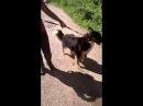 Рэм 14 вольерWhatsApp Video 2018-07-29 at 18.40.42