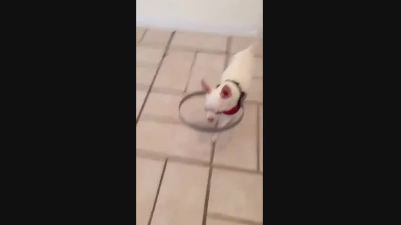 Blind Dog Was Scared To Walk. So Owner Made This For Him