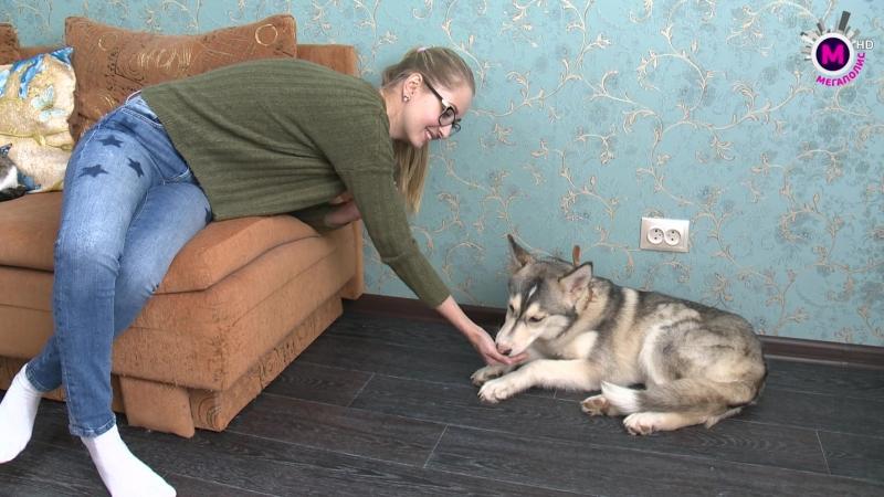 Территория добра - Дом для собаки