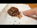 долбанный китаец не даёт лягухе съесть червяка