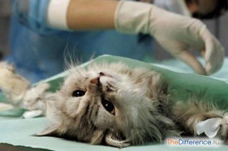 Разница между кастрацией и стерилизацией кошек Домашние животные играют особую роль в нашей жизни, они делают нас добрее и учат многому в этой жизни. Но случается и такое, что многоплодное