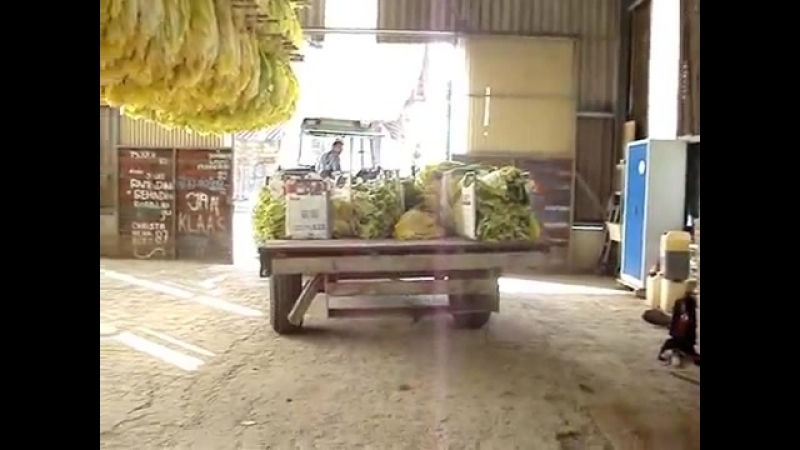 Уборка Burley White, фермерское хозяйство, Швейцария.