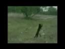 [v- видео ПРО ЖИВОТНЫХ, уморительные животные, Подборка приколов с животным, Ржака.mp4