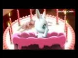 [v-s.mobi]Зайка ZOOBE Любимый я не забыла что у тебя сегодня день рождения!.3gp