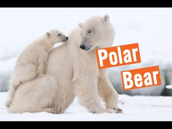 Discovery Education Kids Polar Bears Rescue 2016
