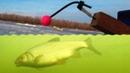 ПЛОТВА, СУПЕР ВОБЛА, густера, окунь, съемка под водой, рыбалка в Астраханской области в январе 2019.