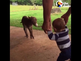 Животные которые любят обниматься